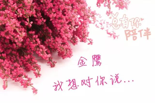 2016届金鹰辉煌战绩蜚声艺届(中篇)